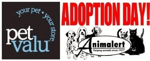 Animalert's Cat Adoption Event Masonville Petvalu