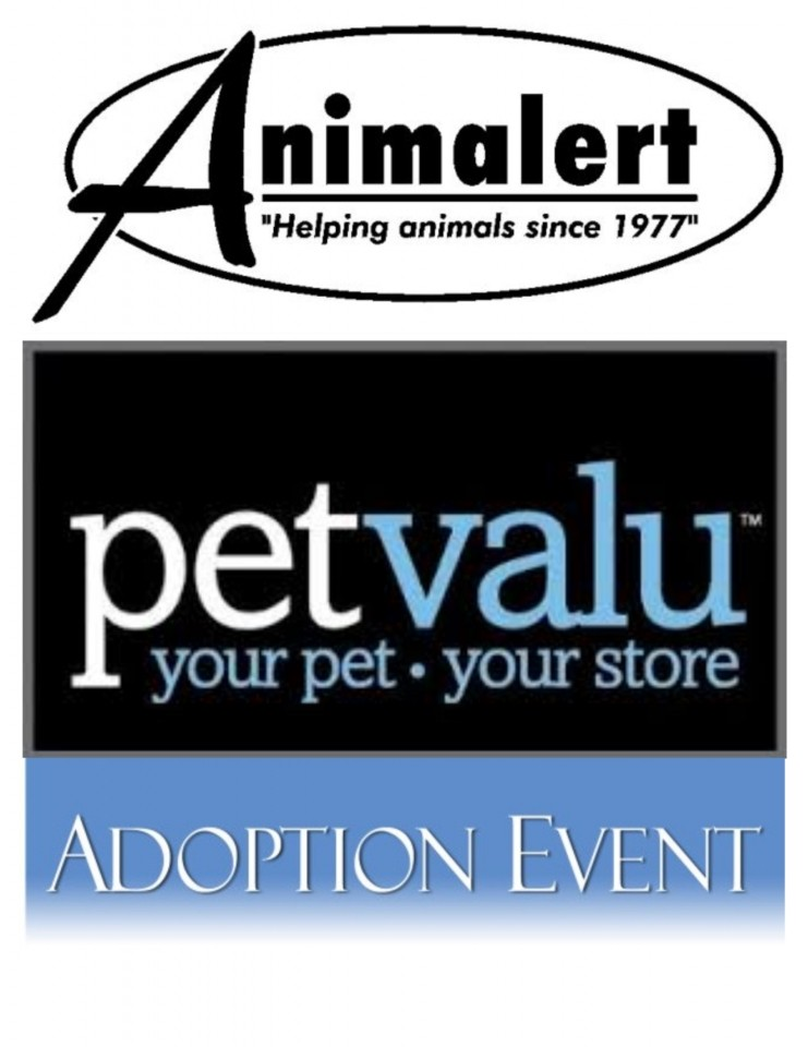 Animalert Cat Adoption Event~Petvalu's Pet Adoption Weekend