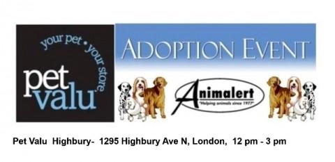 Animalert's Dog Adoption Event @ Highbury Petvalu, Sunday, June 24, 2018