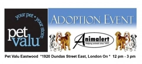 Animalert's Dog Adoption Event, Sunday, October 14, 2018 @ Eastwood Petvalu