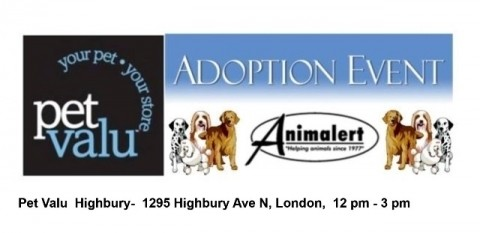 Animalert's Dog Adoption Event@ Petvalu Highbury, Sunday, November 25, 2018