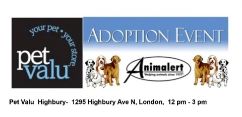 (July 30) Pet Valu Highbury Dog Adoption Event