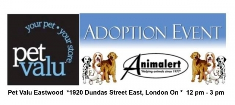 (July 9) Pet Valu Eastwood Dog Adoption Event