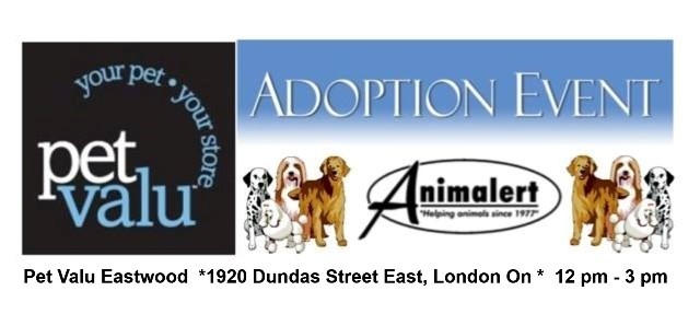 (June 11)  Pet Valu Eastwood Dog Adoption Event