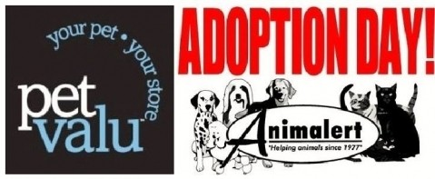 Animalert's Cat Adoption Event @ Hyde Park Petvalu, July 14, 2018